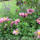 Flower Garden Design Keeps Curb Appeal In The Pink