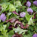 Grow Mesclun, Mixed Greens for your Salad Bowl