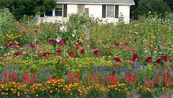 The cutting garden for Cut flower garden designs