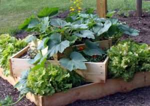 Raised garden beds make good use of space